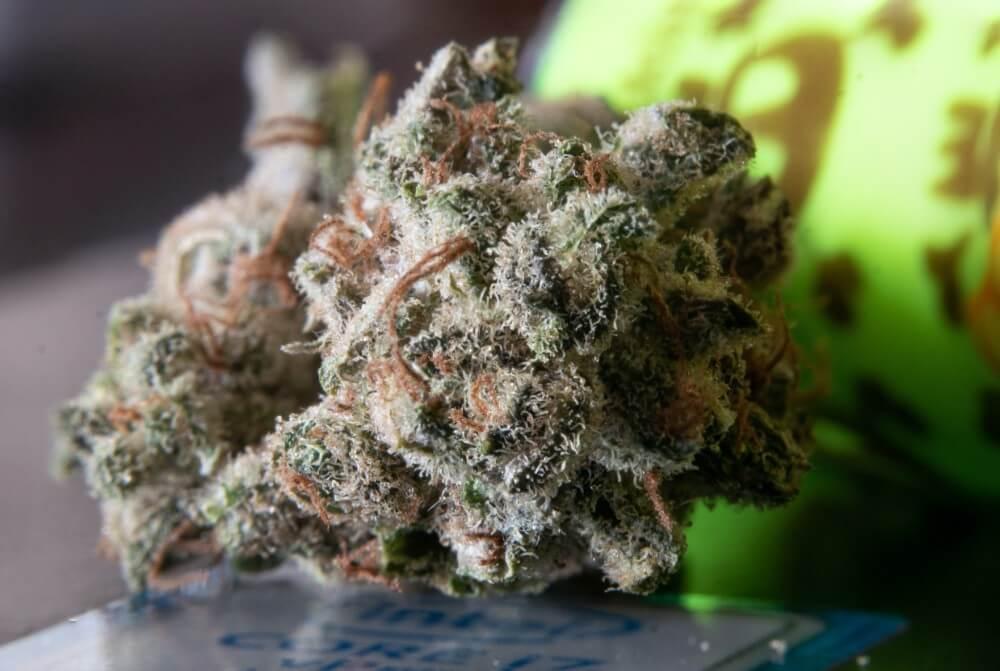 Kwiaty marihuany z THC, legalizacja konopi na świecie