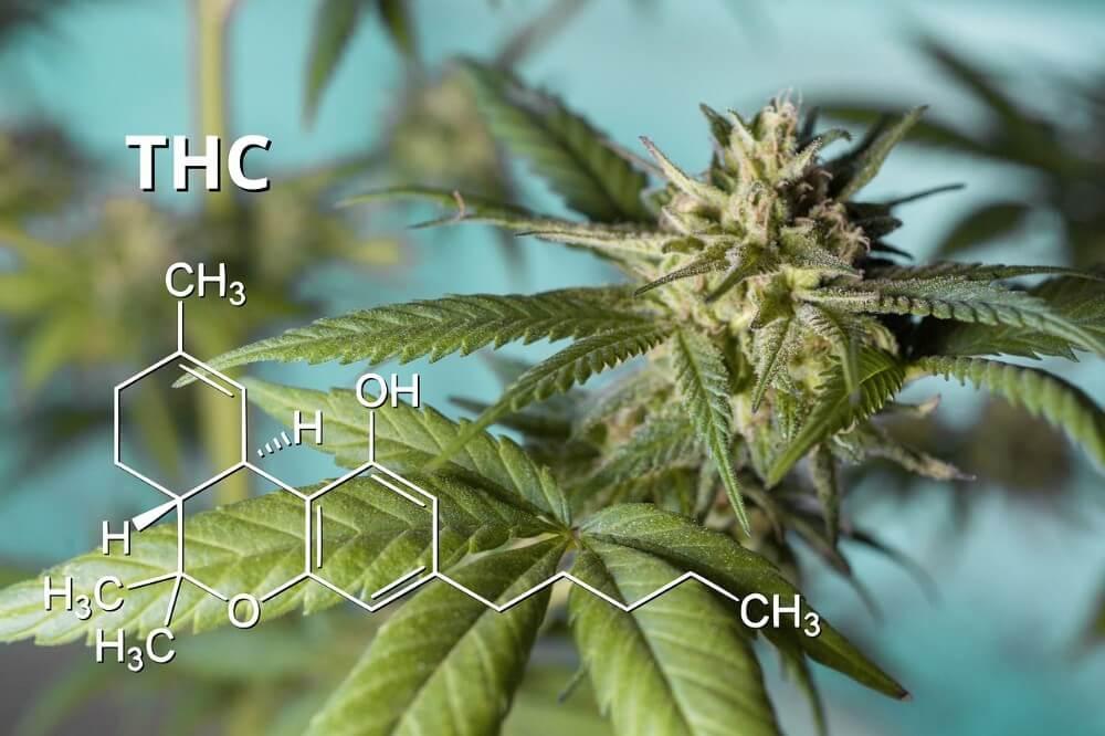THC – właściwości, działanie, zastosowanie